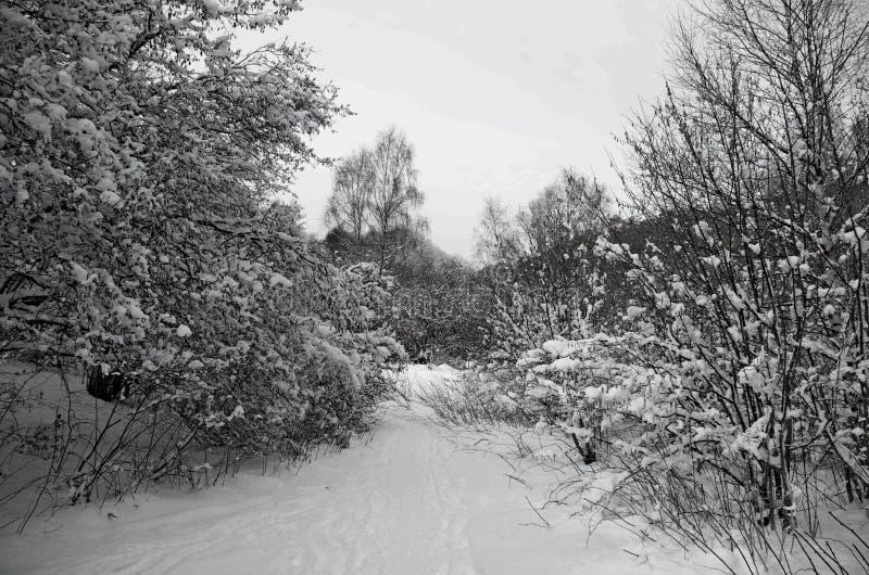风景,雪,冬天在法国,奥韦涅 免版税库存图片