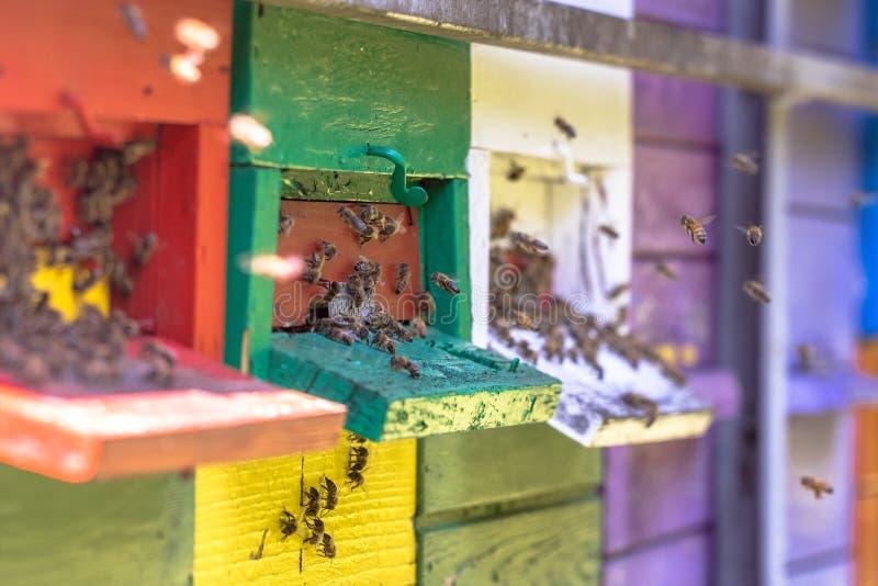 飞行到五颜六色的蜂箱的蜂 免版税库存图片