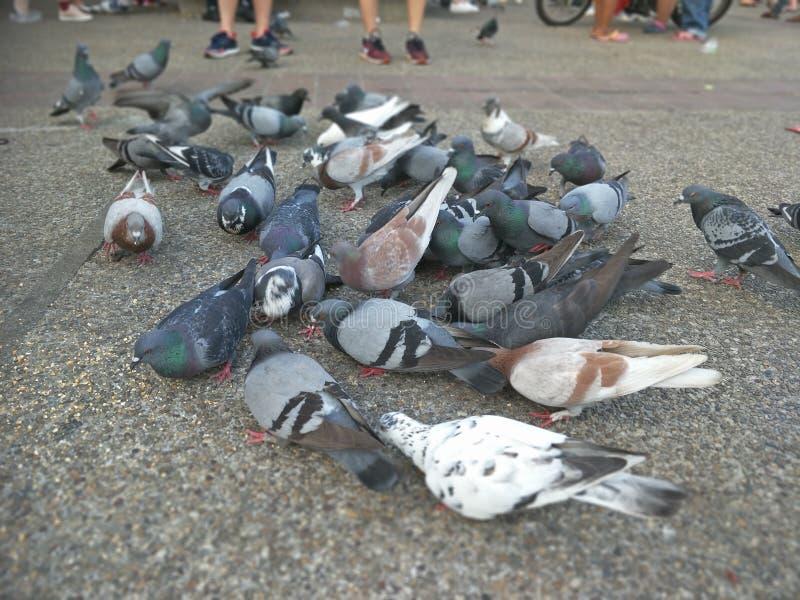 鸟群在晚上 库存图片