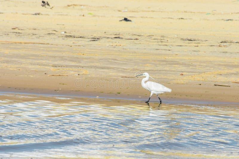 鸟,海鸥,海,水,海滩,鸥,自然, 免版税图库摄影