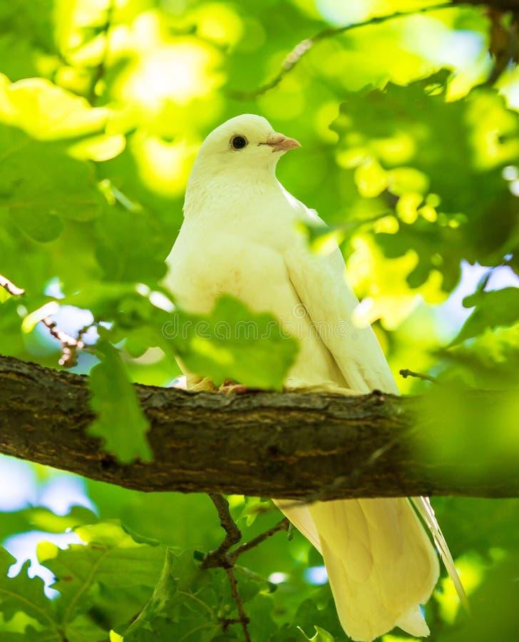 鸠坐一个树枝在夏天 库存图片