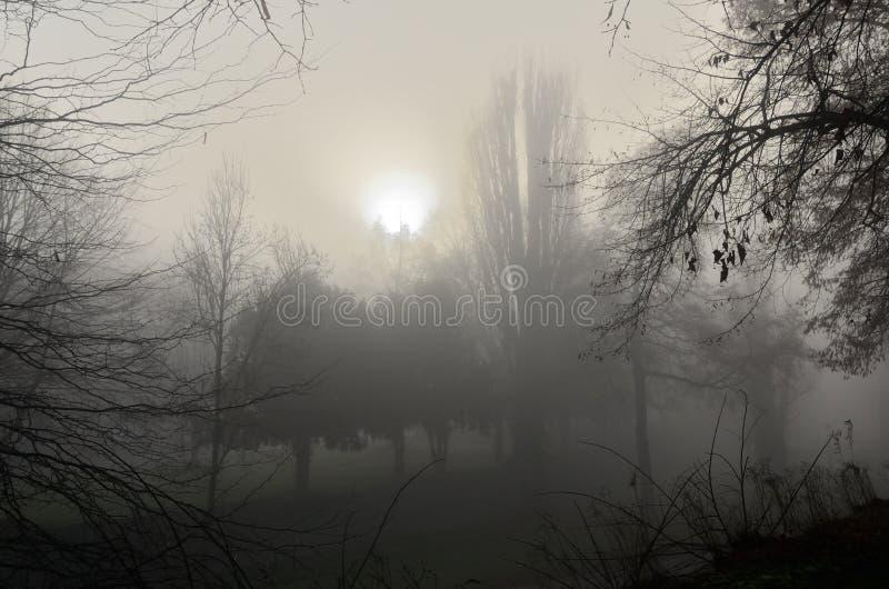 黎明在公园 图库摄影