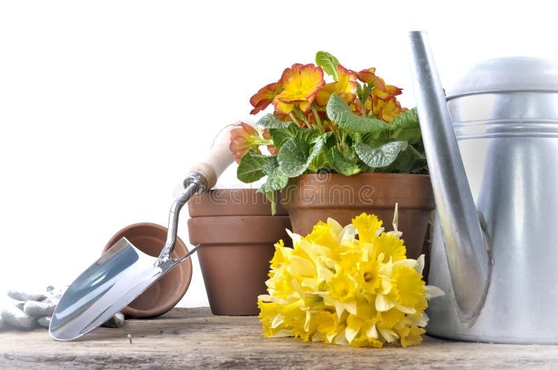 黄水仙花盆和花束与庭院辅助部件的 库存图片