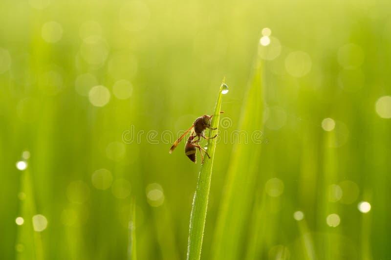 黄蜂在一个晴朗的早晨睡觉 免版税图库摄影