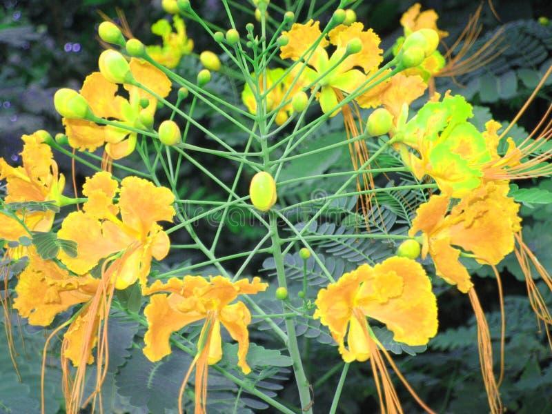 黄色墨西哥的自然秀丽- 库存照片