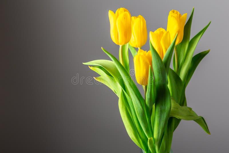 黄色郁金香花束在黑暗的背景的 库存照片