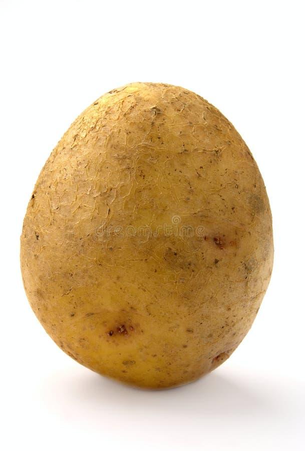 Één aardappel stock afbeeldingen