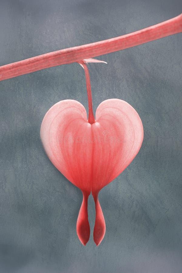 Één aftappende hartbloesem tegen geweven achtergrond royalty-vrije stock foto's