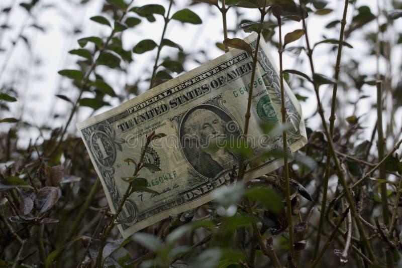 Één Amerikaanse dollar op de boom royalty-vrije stock foto's