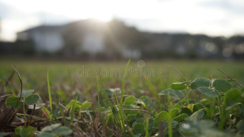 Één of ander landschap stock fotografie