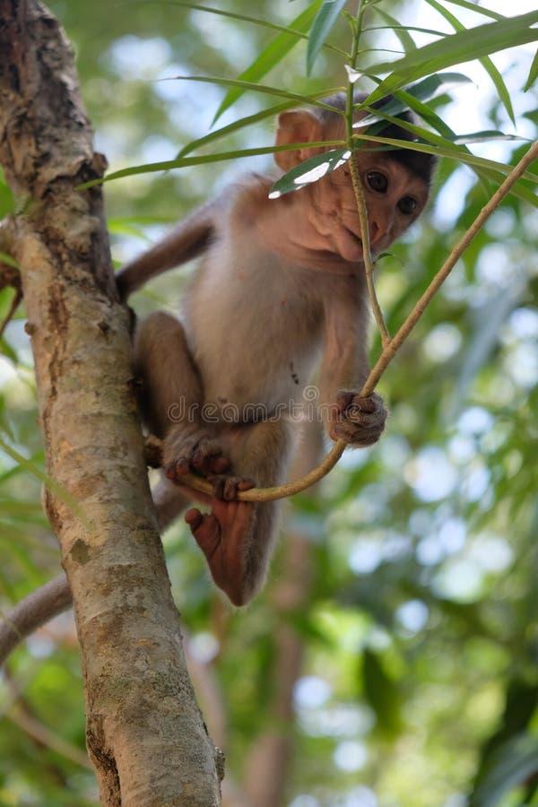 Één babyaap beklimt in een boom en speelt met zijn familie stock fotografie