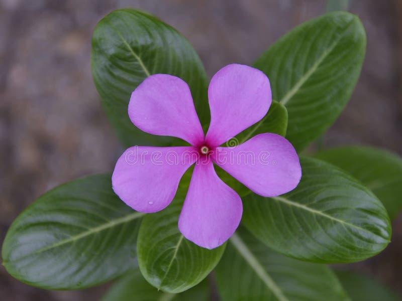 Één bloem op de tuin stock foto