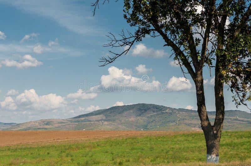 Één boom en deforested bergen in de afstand royalty-vrije stock foto