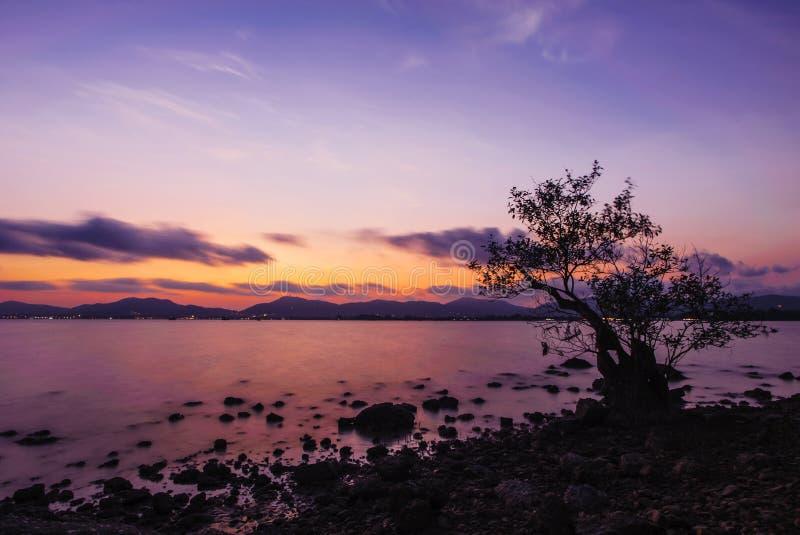 Één boom met kleur van de zonsondergang stock afbeelding
