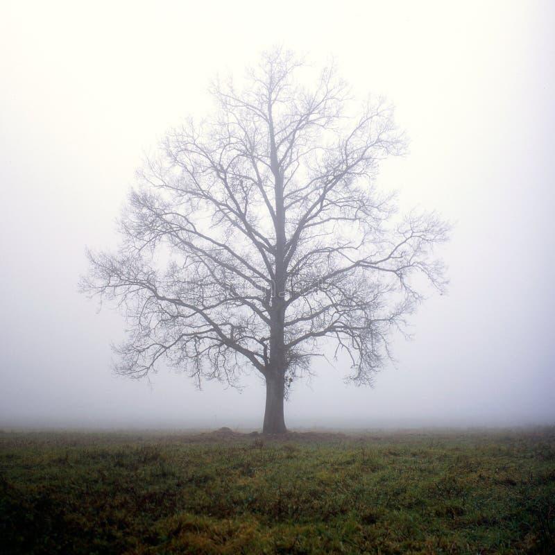 Één boom in mist royalty-vrije stock foto's