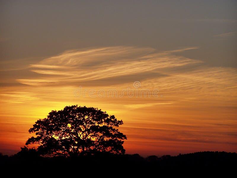 Één boom tijdens de zonsondergang royalty-vrije stock foto