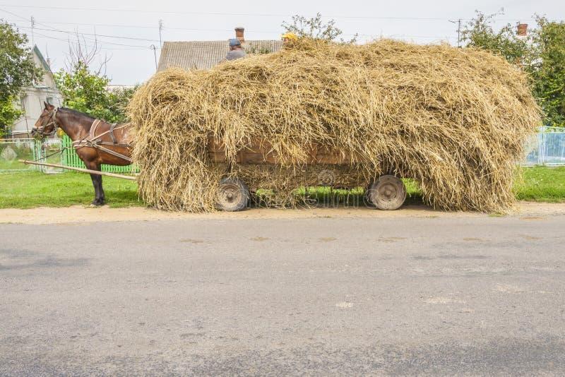 Één bruin hooi van het paardvervoer op houten kar - de Oekraïne. stock foto's
