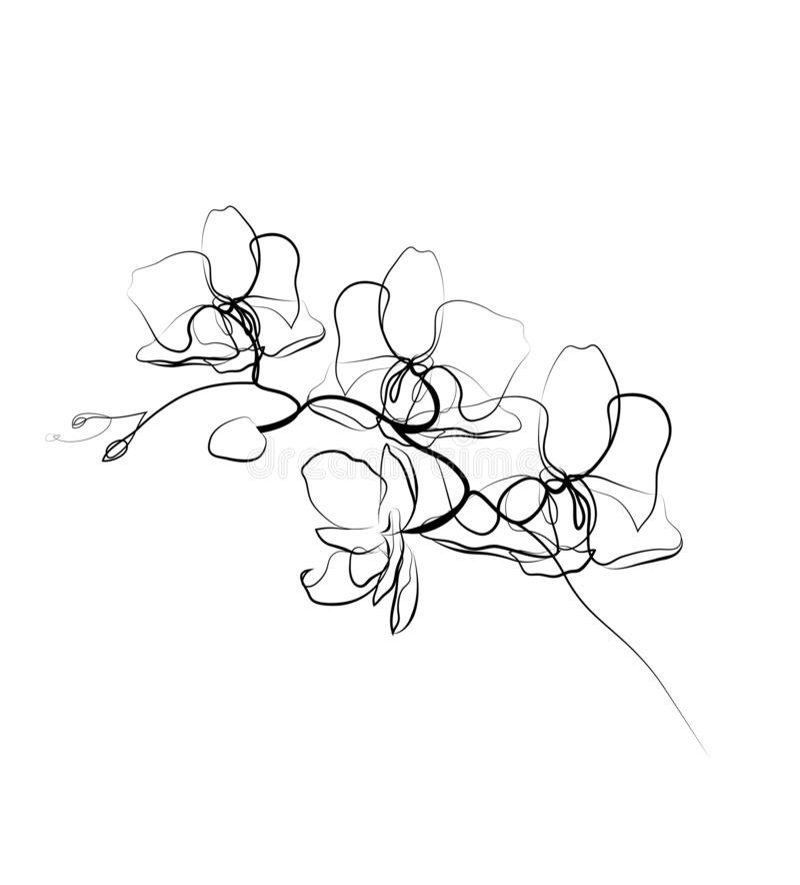 Één de orchideeschets van de lijntekening Moderne enige lijnkunst, esthetische contour royalty-vrije illustratie
