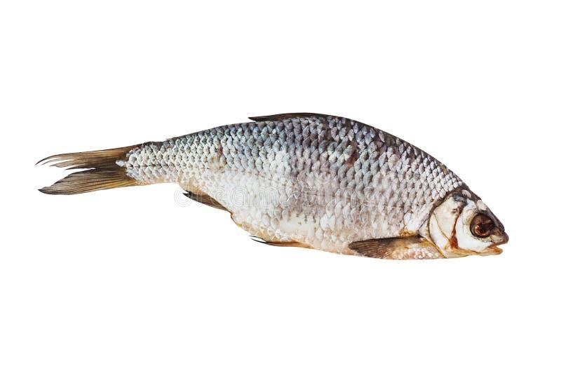 Één droge gezouten die vis op witte achtergrond wordt geïsoleerd Hoogste mening stock afbeeldingen