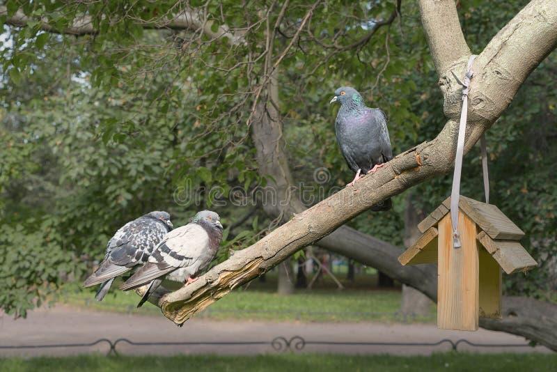 Één duif kijkt neer op andere twee royalty-vrije stock afbeelding