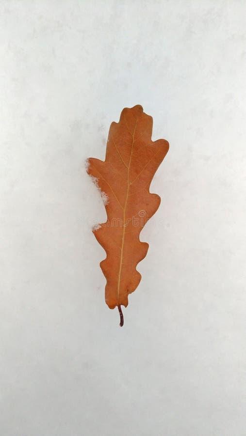 Één enkel blad van eik ligt op een witte achtergrond, sneeuw royalty-vrije stock foto