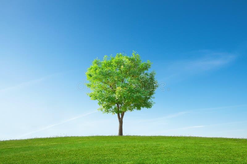Één enkele boom royalty-vrije stock foto's
