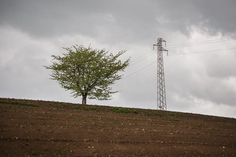 Één enkele boom en elektriciteitspyloon, tegen grijze bewolkte hemel royalty-vrije stock fotografie