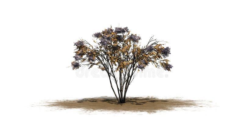 Één enkele Japanse Engelwortelboom in de herfst op een zandgebied vector illustratie