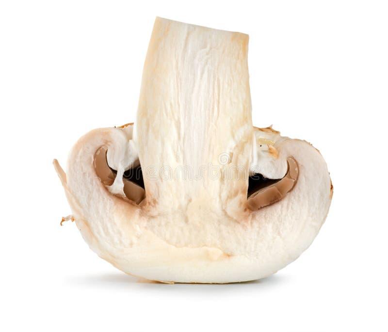Één geïsoleerde champignon stock fotografie