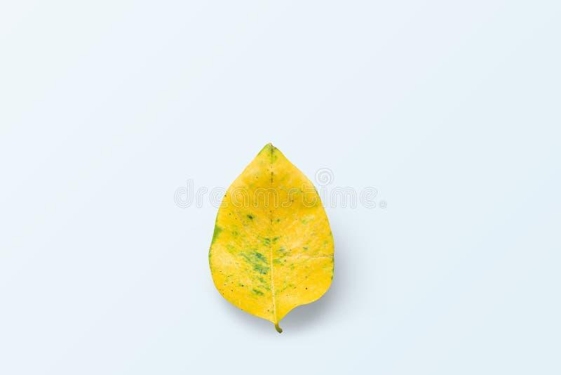 Één geel blad wordt geplaatst op een blauwe achtergrond stock afbeeldingen