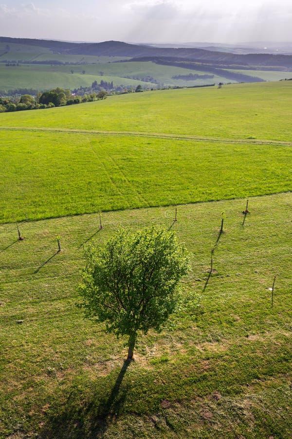 Één gekweekte die fruitboom door jongere kleine bomen in mooie groene boomgaard, zonnige de zomerdag, gezonde levensstijl wordt o stock afbeelding