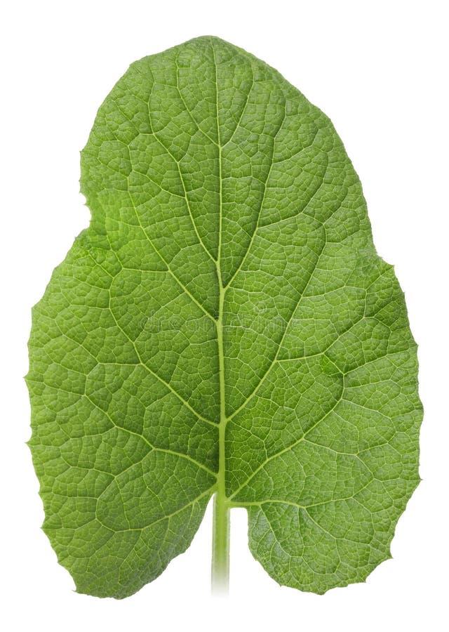 Één groen blad royalty-vrije stock fotografie