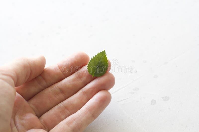 Één groen blad ligt op een hand, op een grijze concrete achtergrond Ecologie, gezond voedsel o royalty-vrije stock fotografie