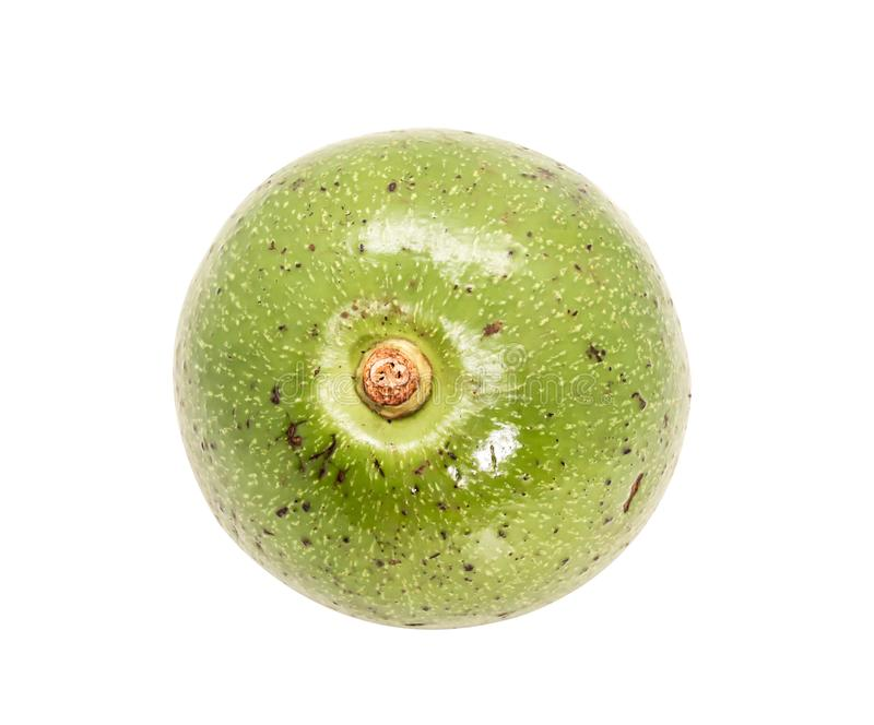 Één groene Thaise avocado op witte achtergrond royalty-vrije stock foto's