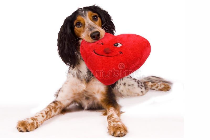 Één het houden van hond stock afbeelding