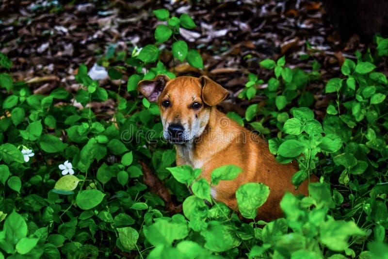 Één hond royalty-vrije stock fotografie