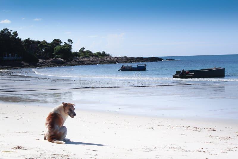 Één hond gaat zitten op strand wit zand en geniet van stock afbeelding
