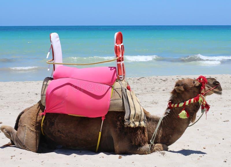 Één kameel ligt door het overzees Kameel op de toeristenkust royalty-vrije stock afbeelding