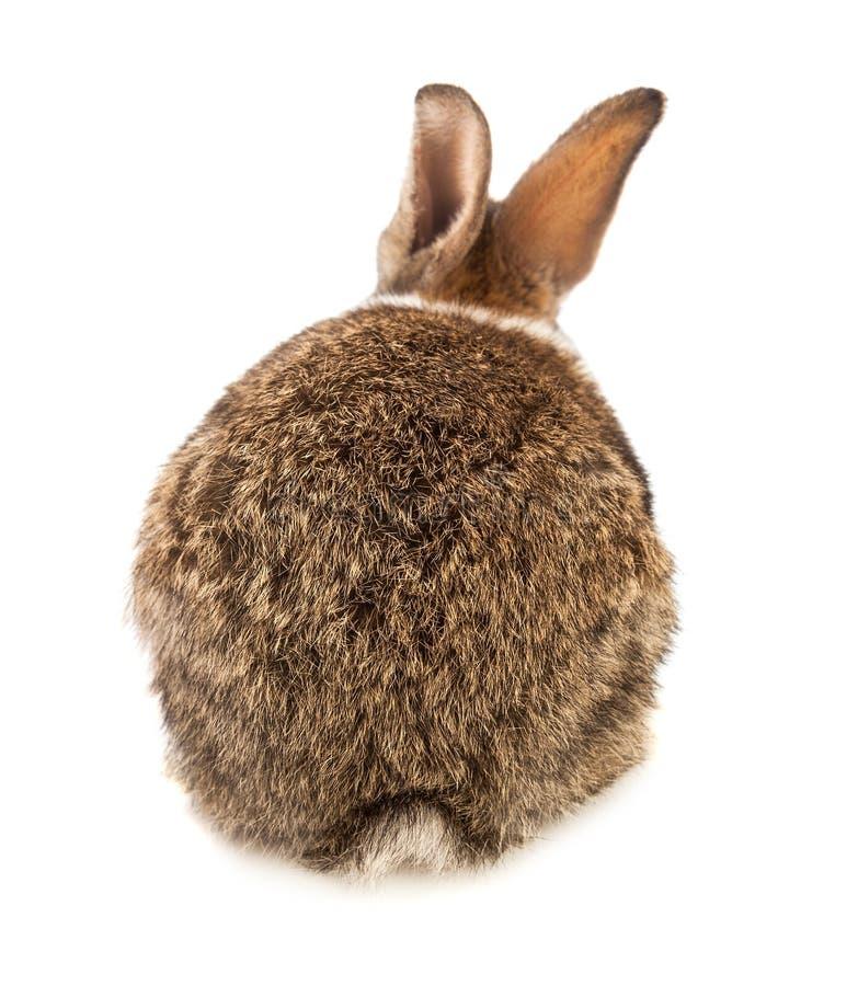 Één konijn op witte achtergrond royalty-vrije stock foto