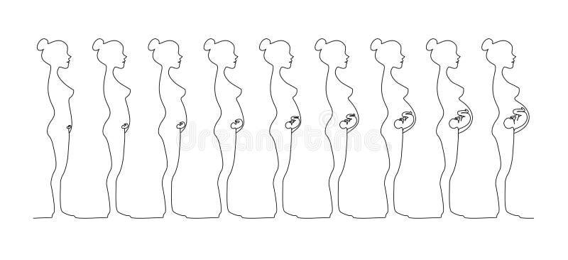 Één lijn zwangere vrouwelijke silhouetten Veranderingen in een vrouwen` s lichaam in zwangerschap stock illustratie