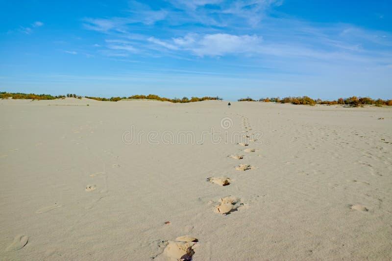 Één mens gaat naar gele zandduinen weg, voetstappen op zand in Nationaal park Druinse Duinen in Noord-Brabant, Nederland royalty-vrije stock foto's