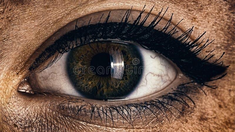 Één menselijke groene bruine vrouwelijke oog dichte omhooggaand royalty-vrije stock fotografie