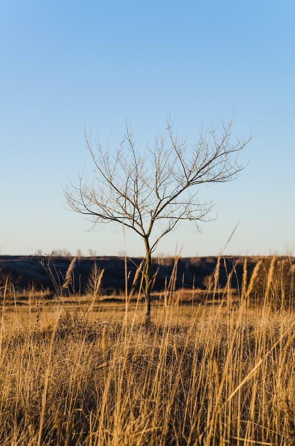Download Één Naakte Boom Op Een Duidelijke Blauwe Hemelachtergrond Stock Foto - Afbeelding bestaande uit seizoen, silhouet: 39105968