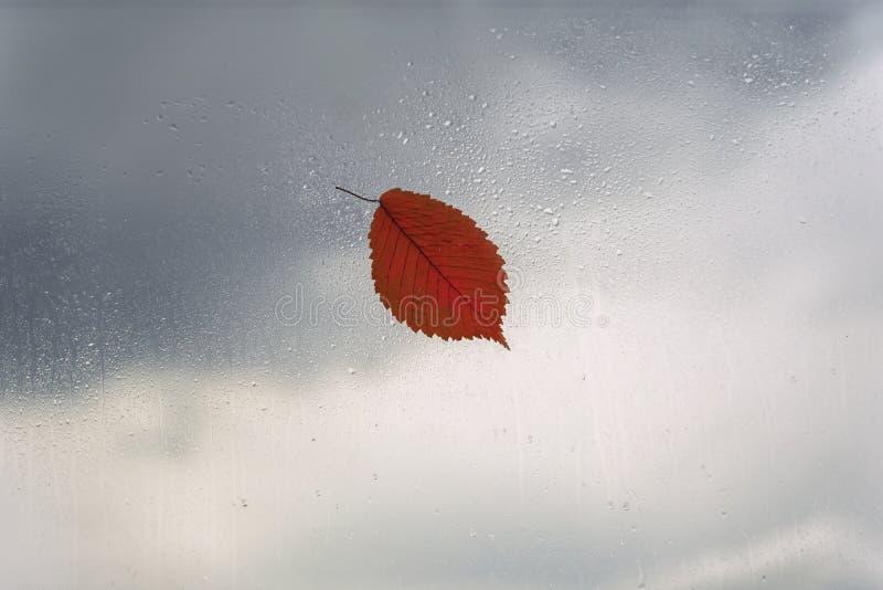 Één oranje blad op nat venster, regendalingen Concept regenachtig weer, dalingsseizoen, de herfst abstracte achtergrond stock foto's