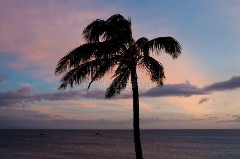 Één palm tegen zonsonderganghemel royalty-vrije stock foto's