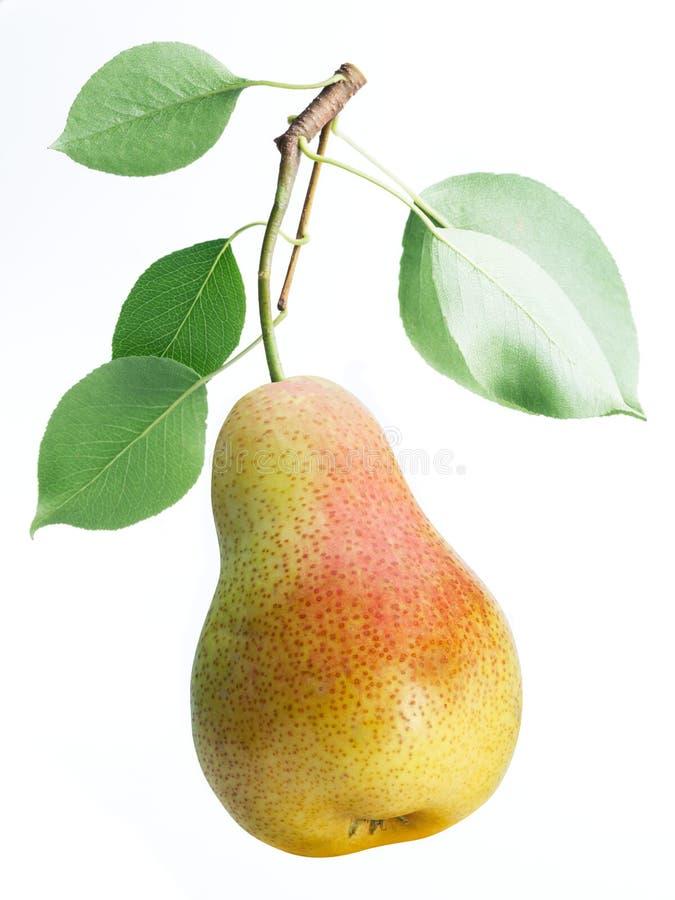 Één perenfruit met perenbladeren op witte achtergrond royalty-vrije stock foto's
