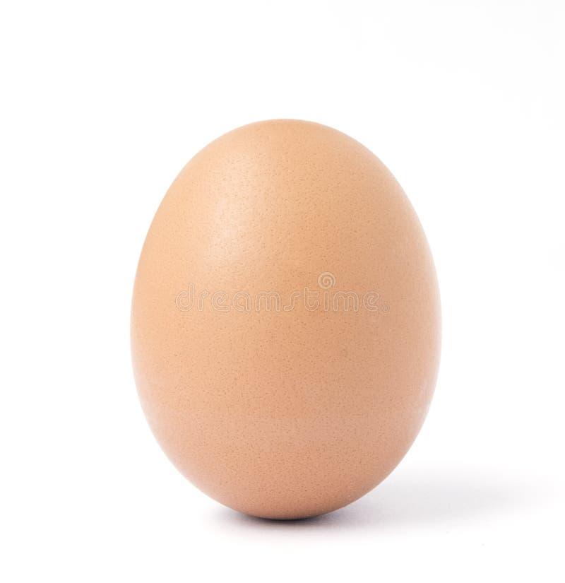 Één recht bruin kippenei stock afbeeldingen