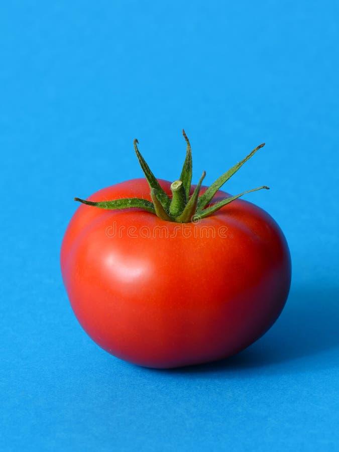 Één Rijpe Tomaat royalty-vrije stock afbeelding