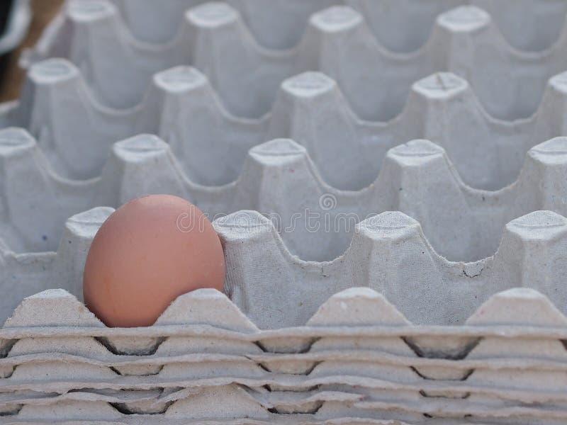 Één ruw ei die eenzaam in de ei verpakking liggen royalty-vrije stock foto's