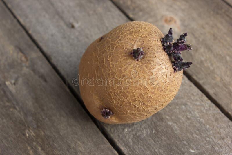 Één selecteert ontkiemde aardappel ligt op een houten lijst royalty-vrije stock foto
